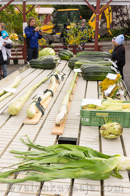 Jättikasvisten SM-kisa 29.9.2012 | Finnish Giant Vegetable Championships