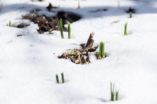 Puutarhan kevätseuranta. Kuvaaja: Markus Kauppinen