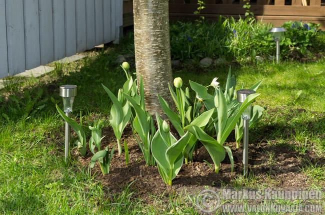 Puutarhan kevätseuranta. Valonkuvaaja: Markus Kauppinen