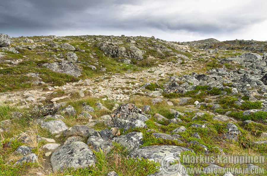 Saanatunturi. Valokuvaaja: Markus Kauppinen