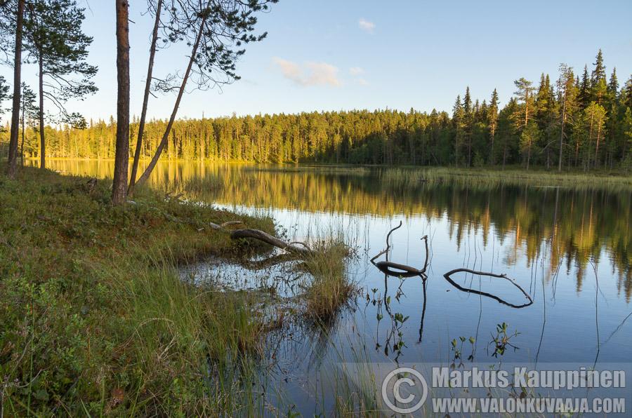 Oulangan kansallispuisto. Kuvaaja: Markus Kauppinen